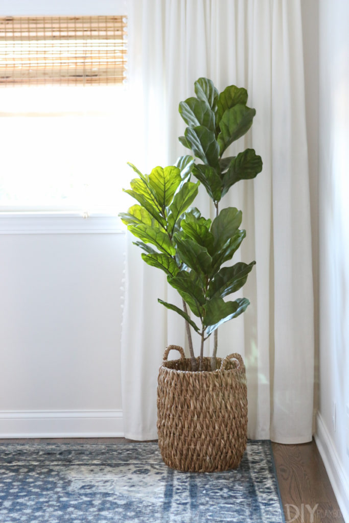 Our favorite indoor plants for your home