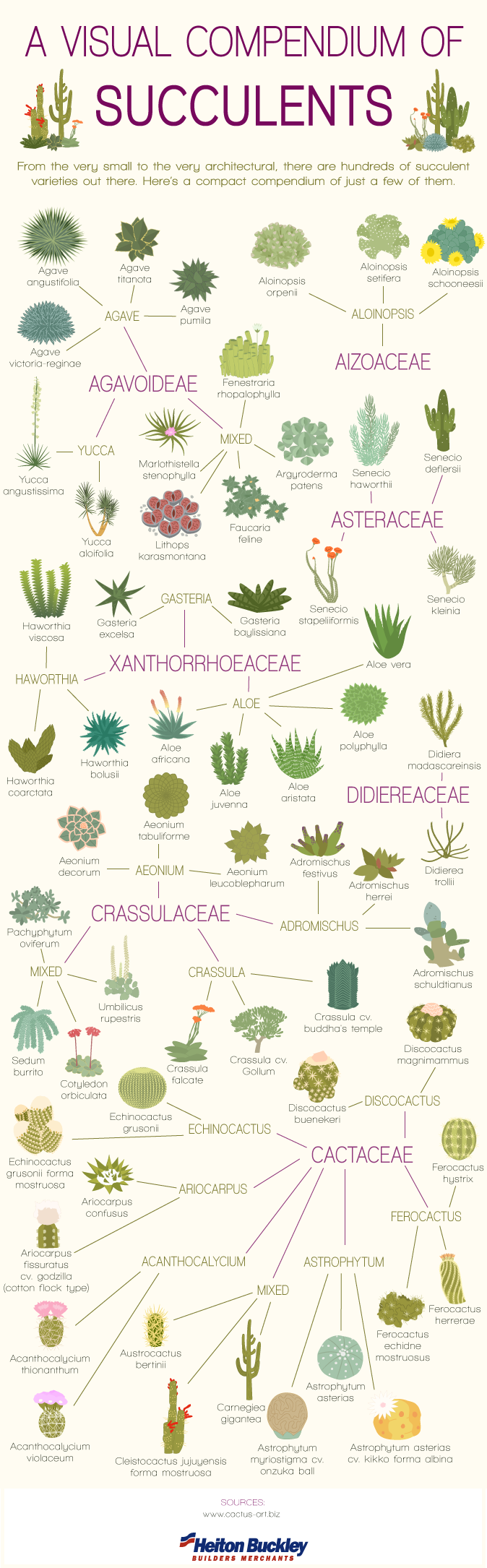 Visual-Comendium-of-Succulents-V2