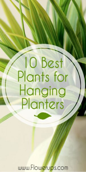 best plants for hanging plants
