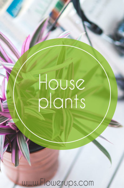 house plants for indoor hanging plants
