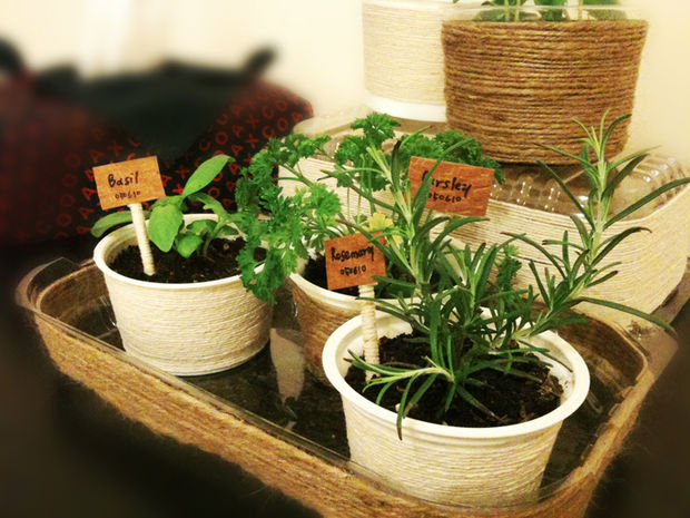 indoor gardening tips - mini herb garden