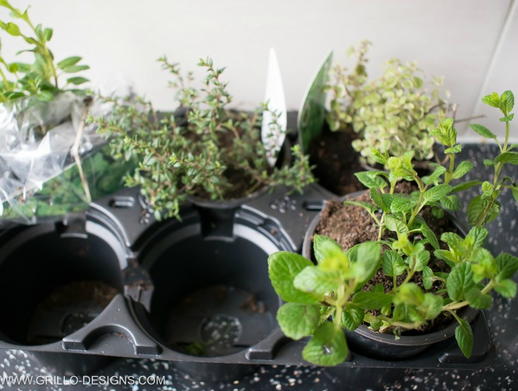 a selection of herbs to put in the herb planter / grillo designs www.grillo-designs.com