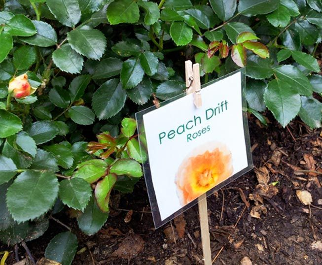 Laminated signs for garden markers