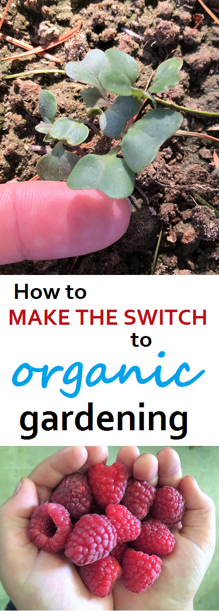 excellent organic gardening information. How to make the switch to organic. great advice