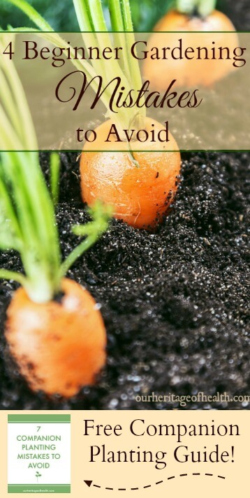 If you're a beginner gardener, avoiding these four common mistakes can help you have a better, more productive garden this year.