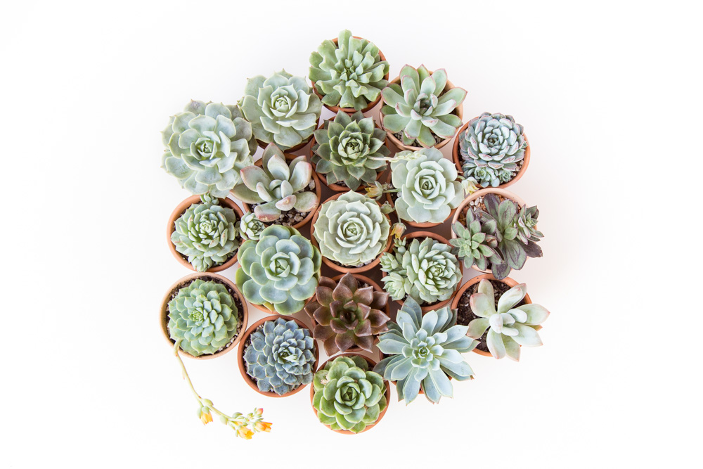 How to Grow Succulents - A Comprehensive Guide | FaithFoodFamilyFun