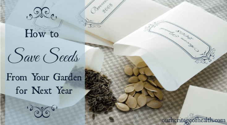 How to save seeds from your garden for next year | ourheritageofhealth.com