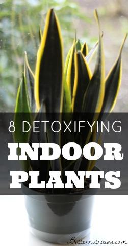 8 Detoxifying Indoor Plants | Butter Nutrition