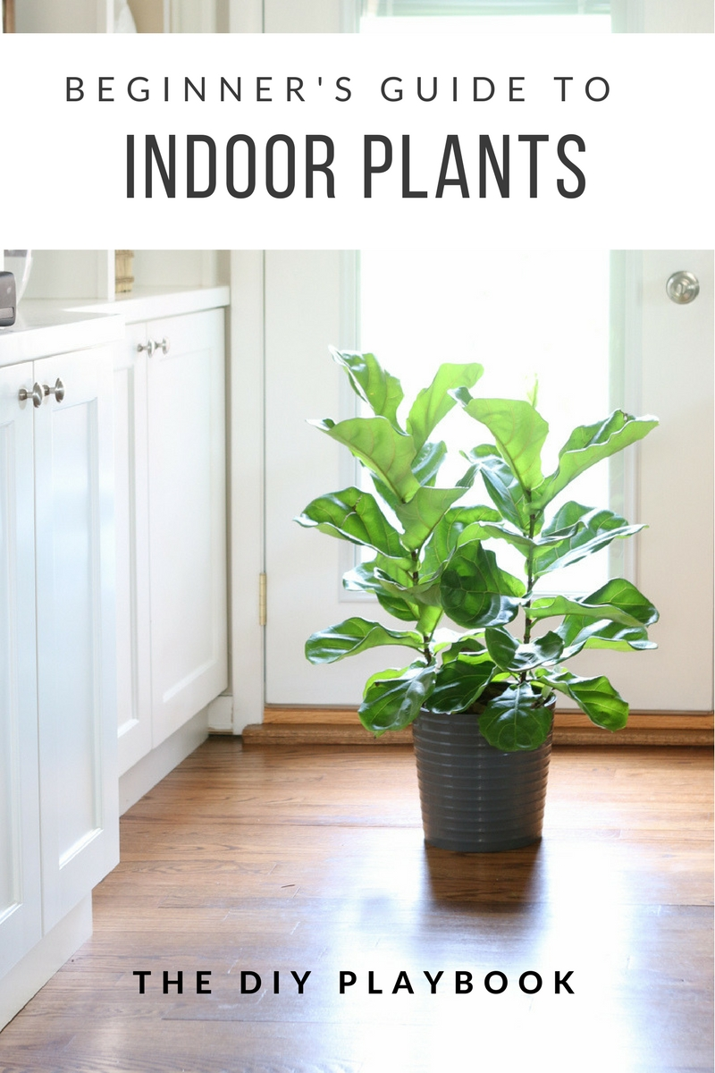 Beginner's Guide to Indoor Plants