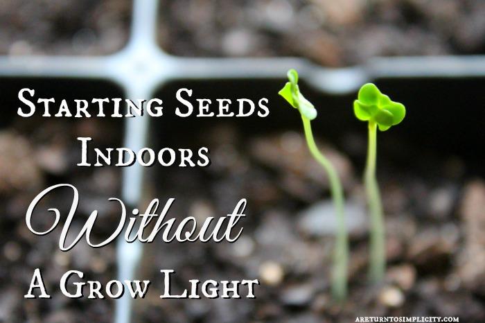 Starting Seeds Indoors Without A Grow Light | areturntosimplicity.com