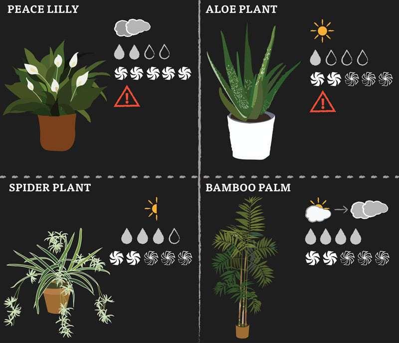 plant-post-2