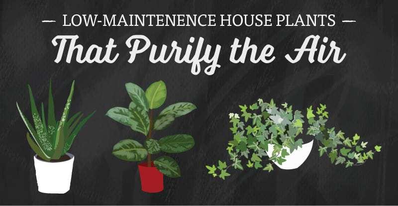 plant-post-header-f
