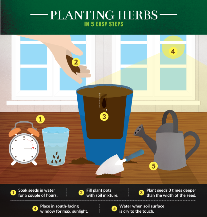 Kitchen Gardening - Planting Herbs in Five Easy Steps