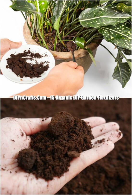 Coffee Grounds Fertilizer