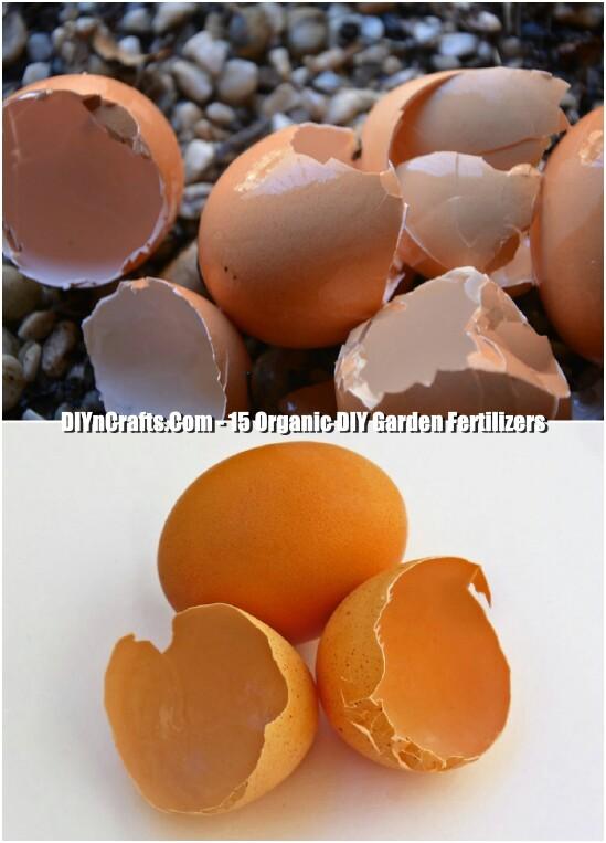 Egg Shell Fertilizer