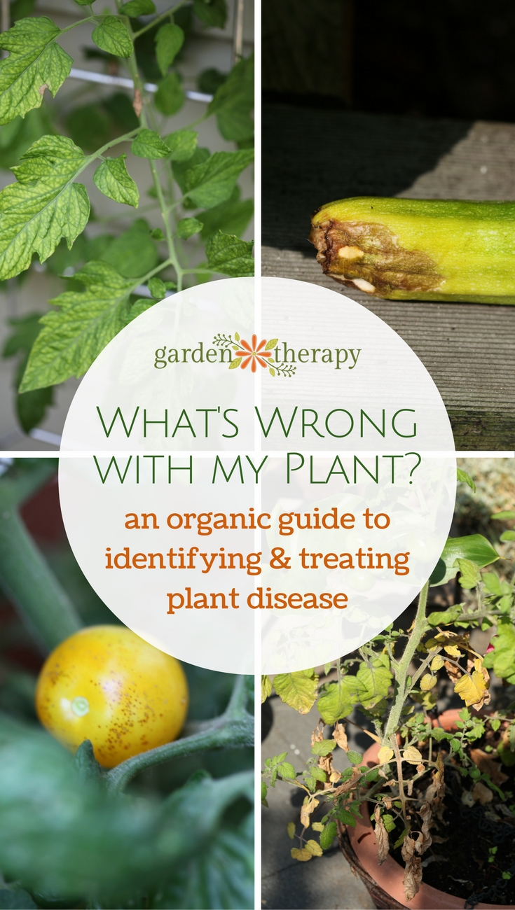 Organic Control of Plant Disease and Pests in the Veggie Garden