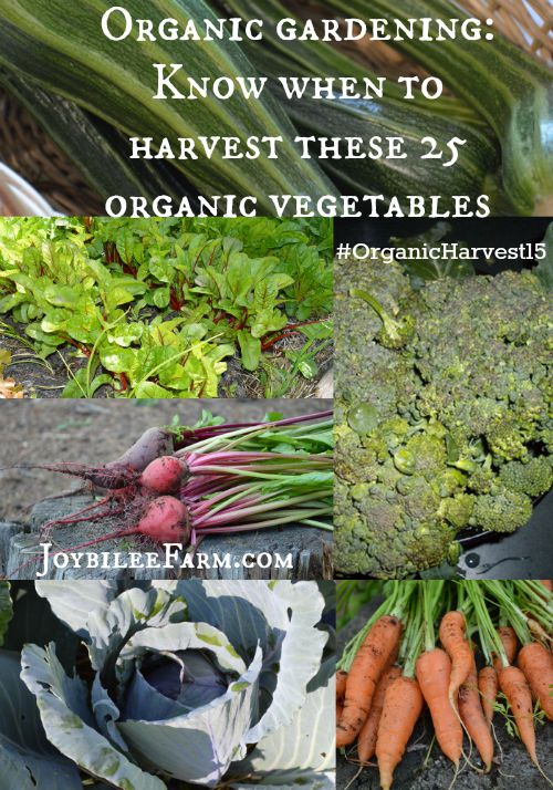 Organic gardening: Know when to harvest these 25 organic vegetables -- Joybilee Farm