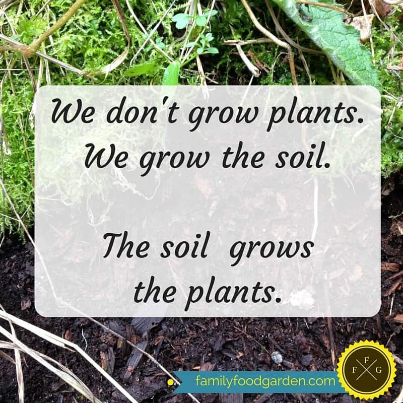 The importance of great soil and microorganisms in your garden