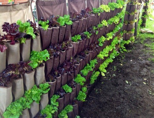 Vertical garden, urban gardening, vertical gardening, shoe garden, shoe organizer garden, shoe holder planter