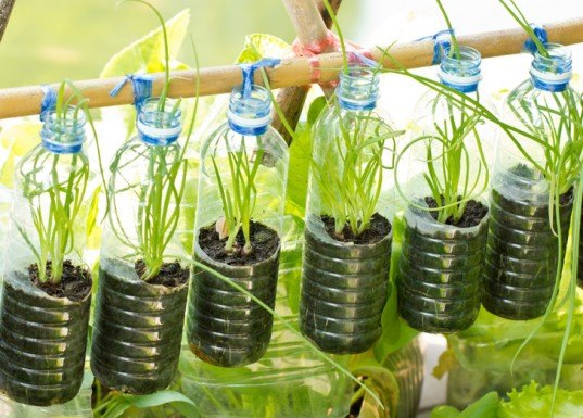 Vertical garden, urban gardening, vertical gardening, herbs, hanging planter, bottle herbs