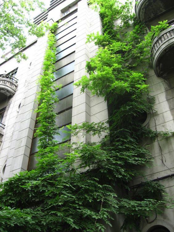 repunzel urban garden