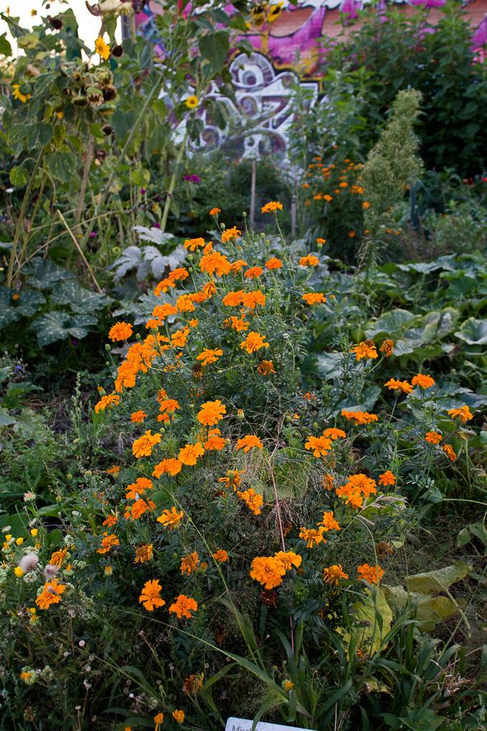 urban-gardening10