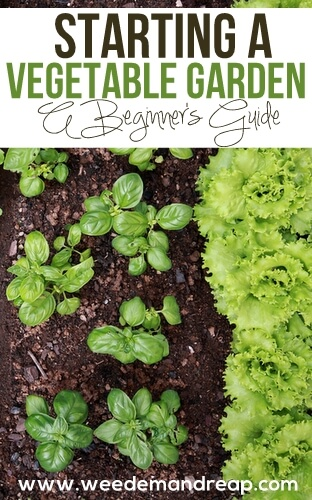 how-to-start-vegetable-garden