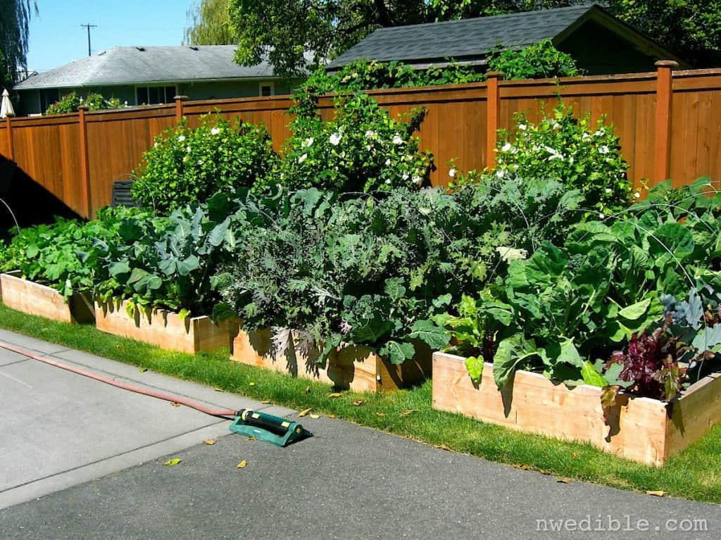 Lawn to Garden197
