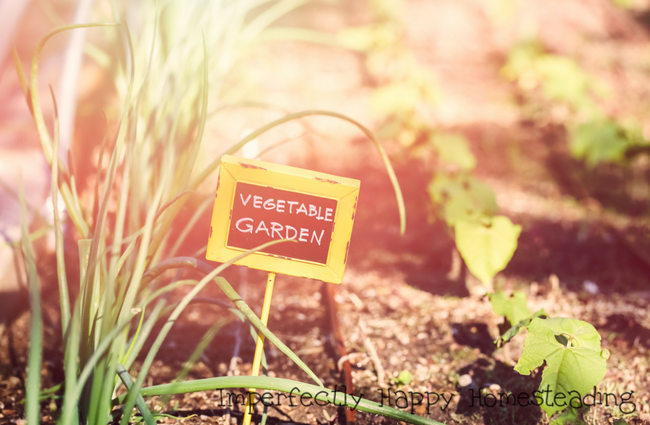 Vegetable Gardening - What to Plant in June
