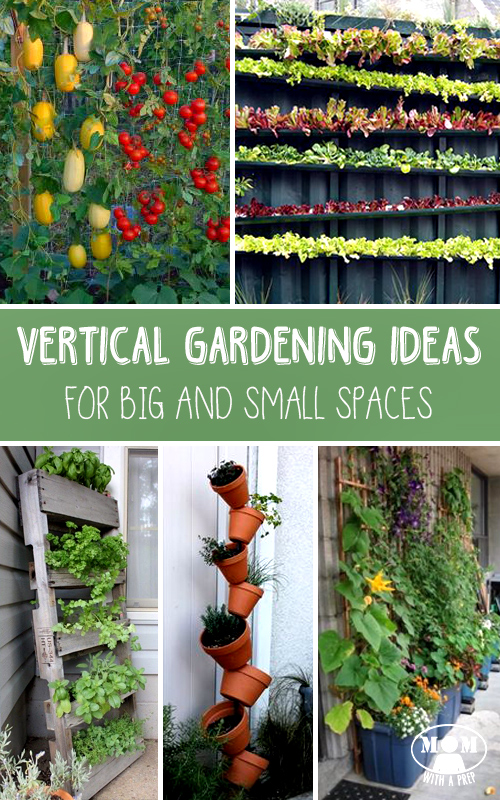 If you don't think you have room to do traditional gardening, go VERTICAL!