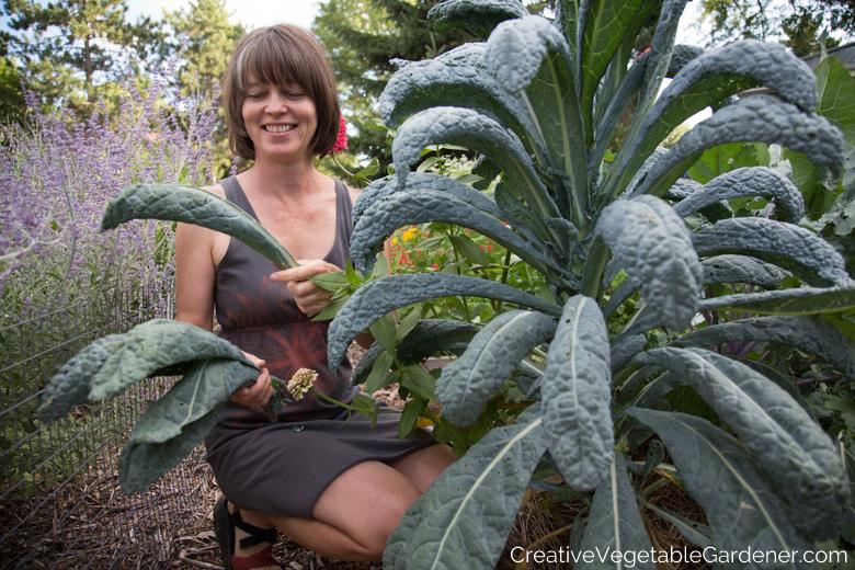 harvesting kale how to start a small vegetable garden